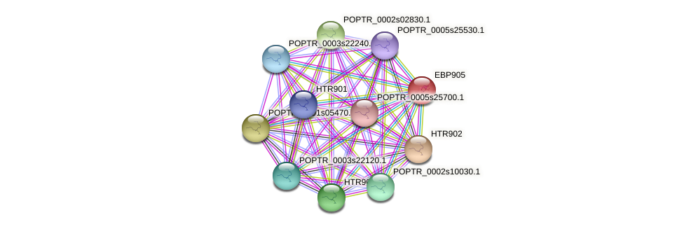 POPTR_0004s16700.1 protein (Populus trichocarpa) - STRING interaction network