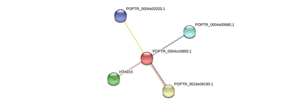 POPTR_0004s16850.1 protein (Populus trichocarpa) - STRING interaction network