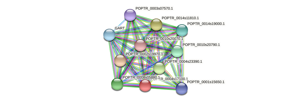 POPTR_0004s17100.1 protein (Populus trichocarpa) - STRING interaction network