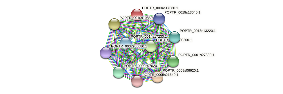 POPTR_0004s17360.1 protein (Populus trichocarpa) - STRING interaction network