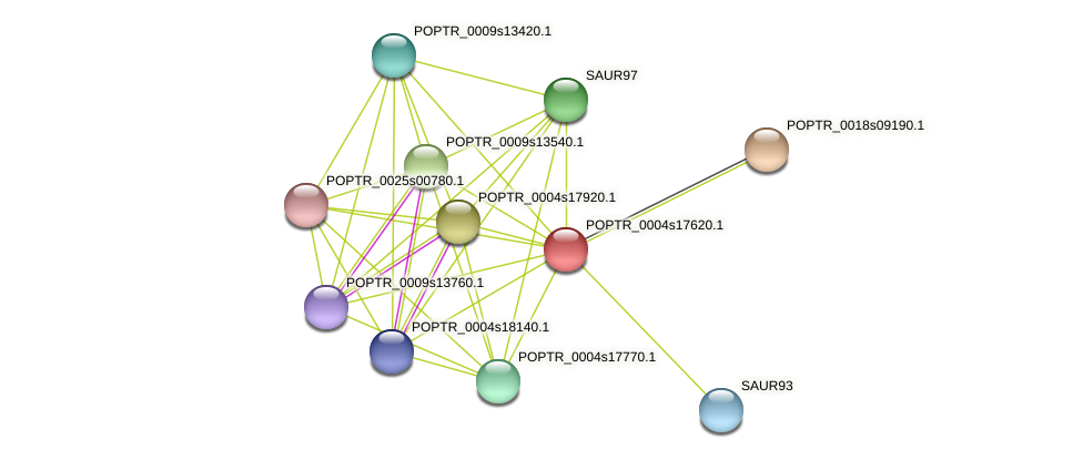 POPTR_0004s17620.1 protein (Populus trichocarpa) - STRING interaction network