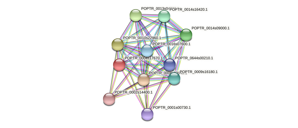 POPTR_0004s17670.1 protein (Populus trichocarpa) - STRING interaction network