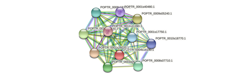 POPTR_0004s18190.1 protein (Populus trichocarpa) - STRING interaction network