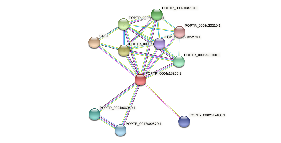 POPTR_0004s18200.1 protein (Populus trichocarpa) - STRING interaction network