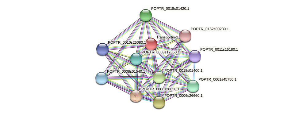 POPTR_0004s18420.1 protein (Populus trichocarpa) - STRING interaction network