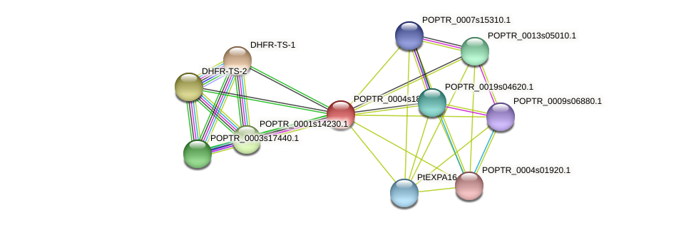 POPTR_0004s18850.1 protein (Populus trichocarpa) - STRING interaction network