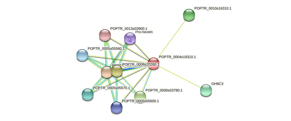 POPTR_0004s19310.1 protein (Populus trichocarpa) - STRING interaction network