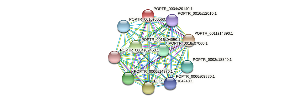 POPTR_0004s20140.1 protein (Populus trichocarpa) - STRING interaction network