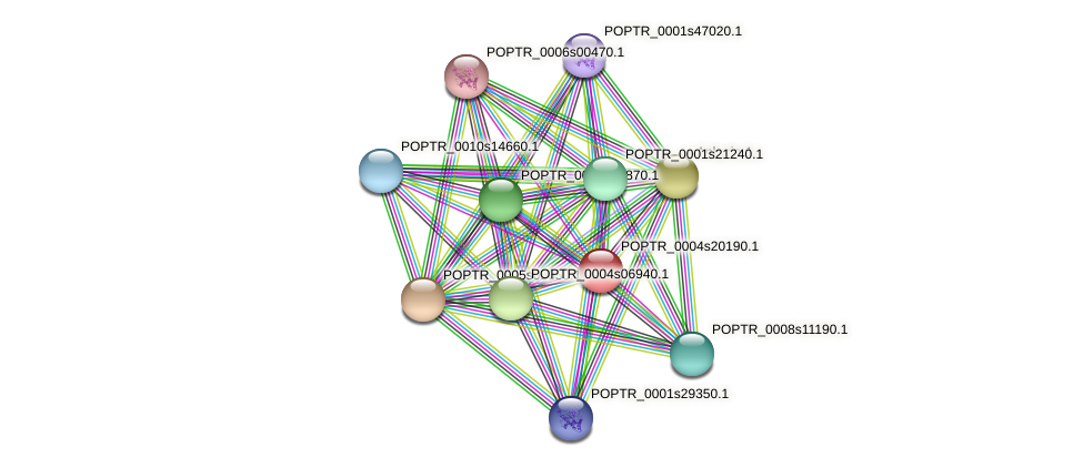 POPTR_0004s20190.1 protein (Populus trichocarpa) - STRING interaction network