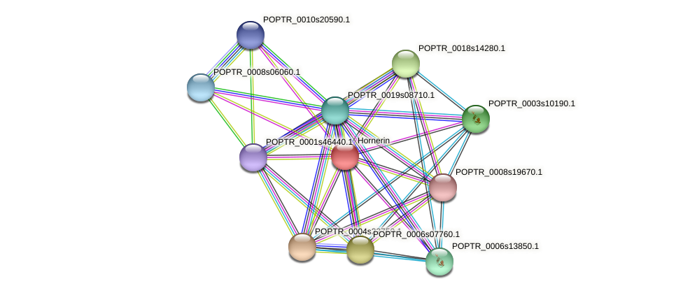 POPTR_0004s20450.1 protein (Populus trichocarpa) - STRING interaction network