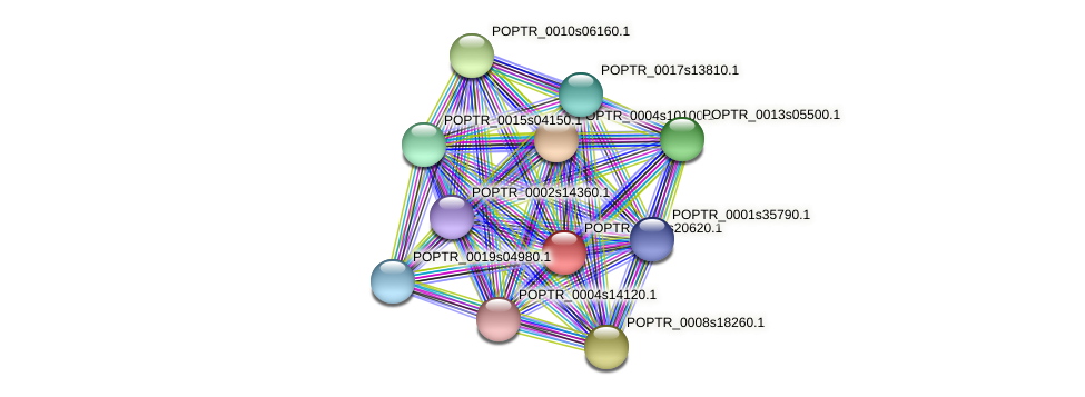 POPTR_0004s20620.1 protein (Populus trichocarpa) - STRING interaction network