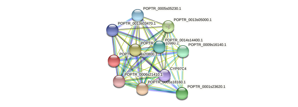 POPTR_0004s20800.1 protein (Populus trichocarpa) - STRING interaction network