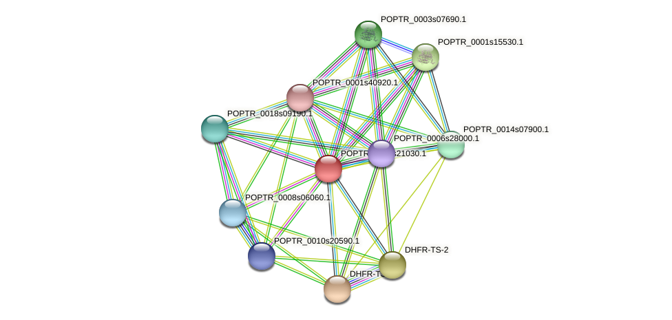 POPTR_0004s21030.1 protein (Populus trichocarpa) - STRING interaction network