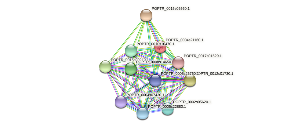 POPTR_0004s21160.1 protein (Populus trichocarpa) - STRING interaction network