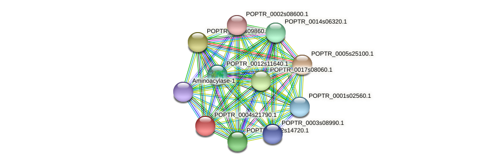 POPTR_0004s21790.1 protein (Populus trichocarpa) - STRING interaction network