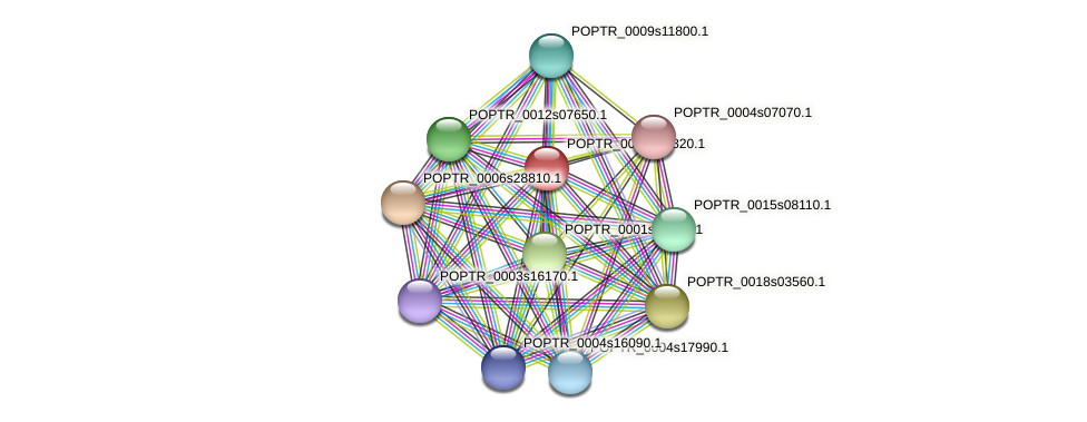 POPTR_0004s21820.1 protein (Populus trichocarpa) - STRING interaction network