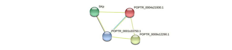 POPTR_0004s21930.1 protein (Populus trichocarpa) - STRING interaction network