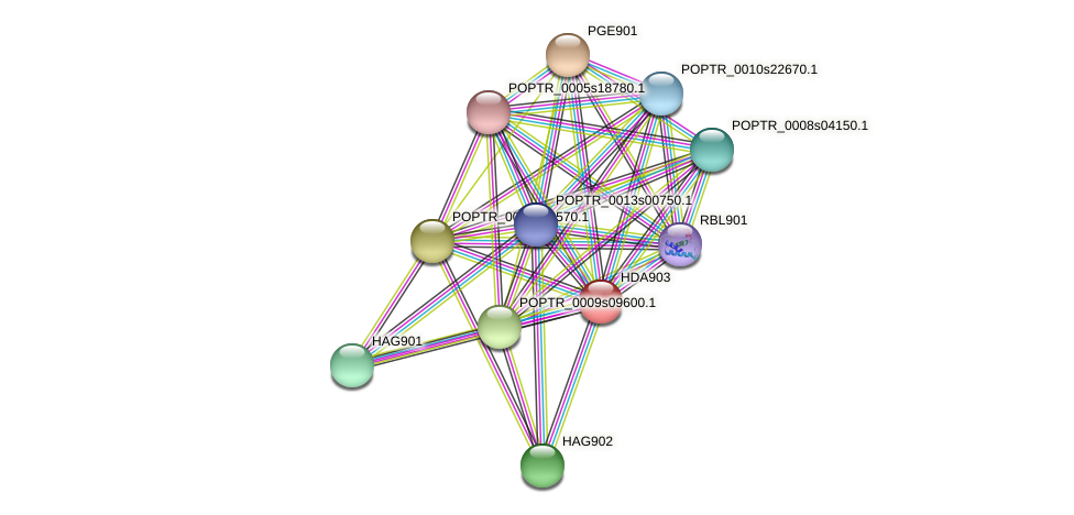 POPTR_0004s21950.1 protein (Populus trichocarpa) - STRING interaction network