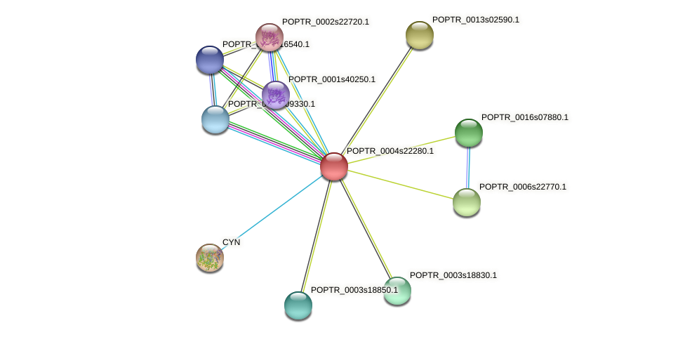 POPTR_0004s22280.1 protein (Populus trichocarpa) - STRING interaction network