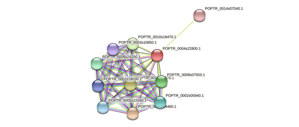 POPTR_0004s22800.1 protein (Populus trichocarpa) - STRING interaction network