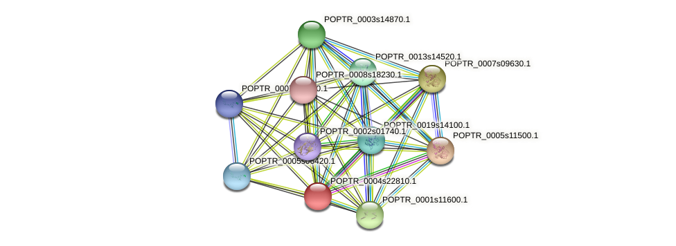 POPTR_0004s22810.1 protein (Populus trichocarpa) - STRING interaction network