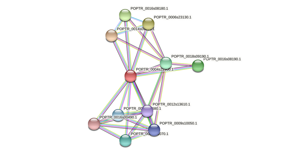 POPTR_0004s22900.1 protein (Populus trichocarpa) - STRING interaction network