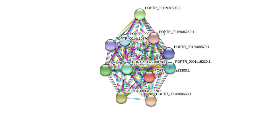 POPTR_0004s23300.1 protein (Populus trichocarpa) - STRING interaction network