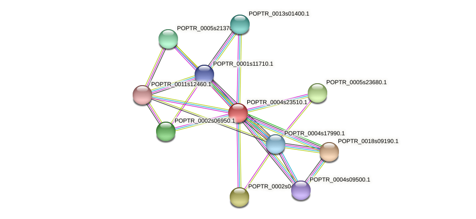 POPTR_0004s23510.1 protein (Populus trichocarpa) - STRING interaction network