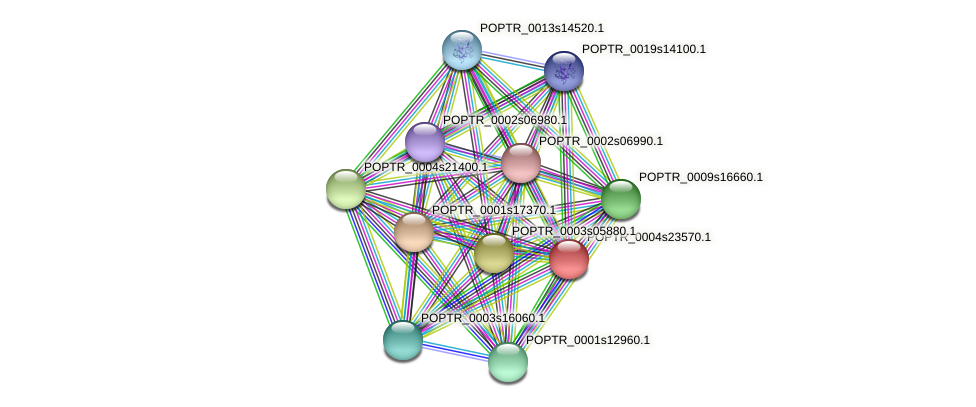 POPTR_0004s23570.1 protein (Populus trichocarpa) - STRING interaction network