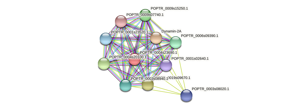 POPTR_0004s23690.1 protein (Populus trichocarpa) - STRING interaction network