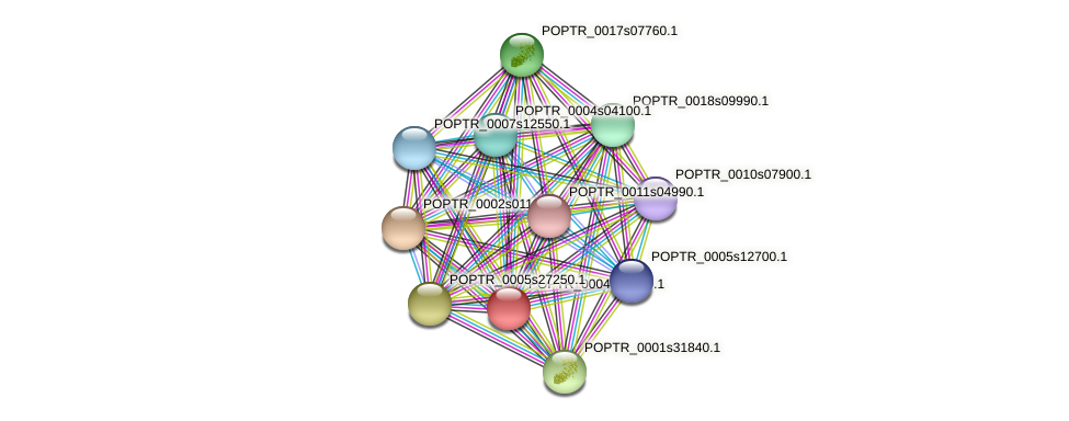 POPTR_0004s23740.1 protein (Populus trichocarpa) - STRING interaction network
