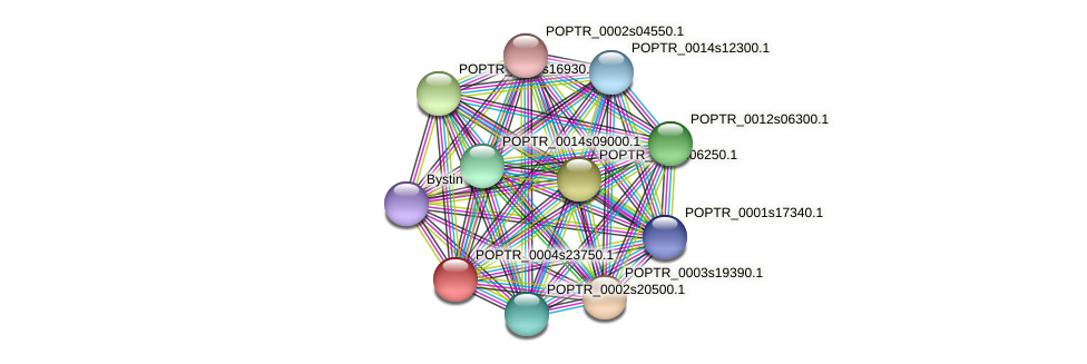 POPTR_0004s23750.1 protein (Populus trichocarpa) - STRING interaction network