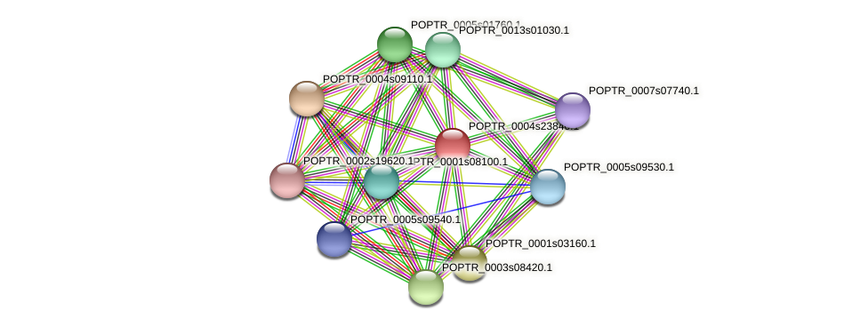 POPTR_0004s23840.1 protein (Populus trichocarpa) - STRING interaction network