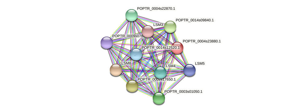 POPTR_0004s23880.1 protein (Populus trichocarpa) - STRING interaction network