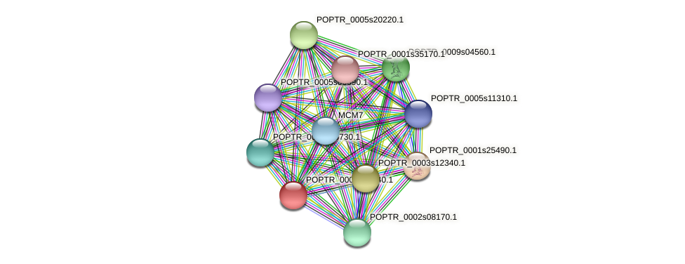POPTR_0004s23940.1 protein (Populus trichocarpa) - STRING interaction network