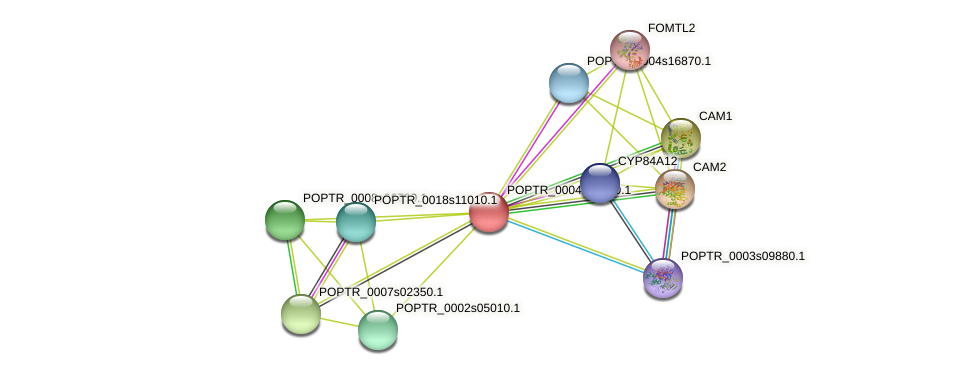 POPTR_0004s23980.1 protein (Populus trichocarpa) - STRING interaction network