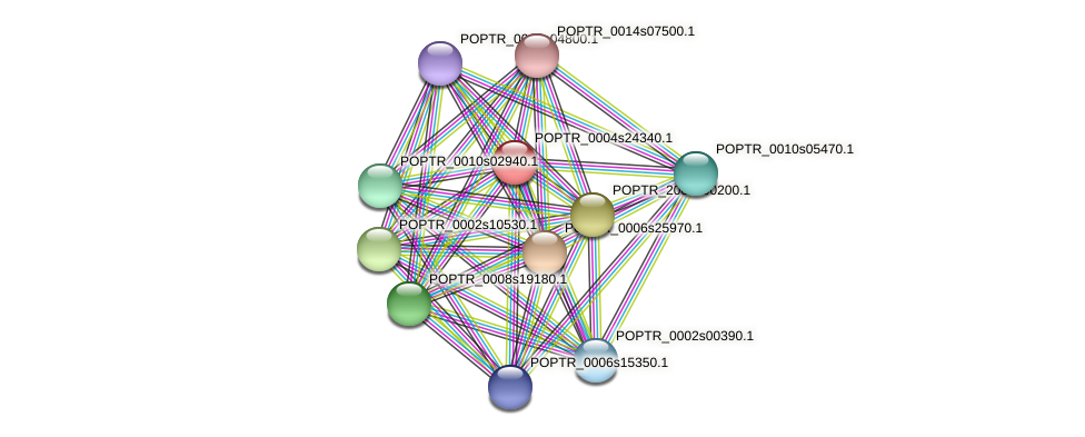 POPTR_0004s24340.1 protein (Populus trichocarpa) - STRING interaction network