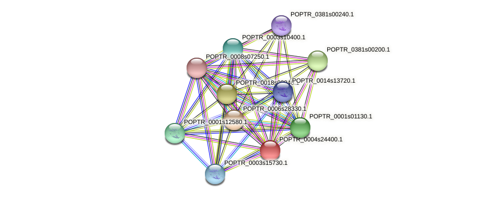 POPTR_0004s24400.1 protein (Populus trichocarpa) - STRING interaction network