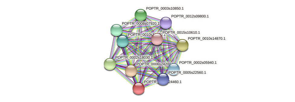 POPTR_0004s24460.1 protein (Populus trichocarpa) - STRING interaction network
