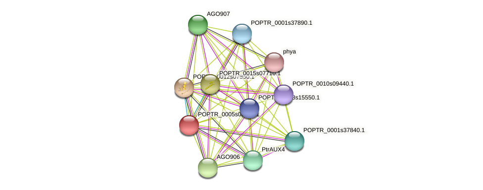 POPTR_0005s00320.1 protein (Populus trichocarpa) - STRING interaction network
