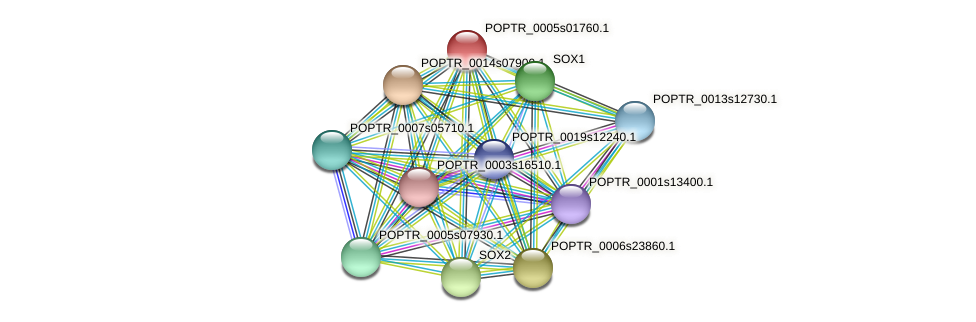 POPTR_0005s01760.1 protein (Populus trichocarpa) - STRING interaction network