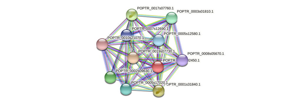 POPTR_0005s02450.1 protein (Populus trichocarpa) - STRING interaction network