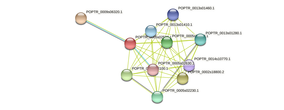 POPTR_0005s02530.1 protein (Populus trichocarpa) - STRING interaction network
