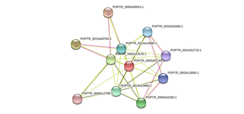 POPTR_0005s02740.1 protein (Populus trichocarpa) - STRING interaction network
