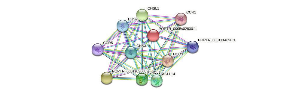 POPTR_0005s02830.1 protein (Populus trichocarpa) - STRING interaction network