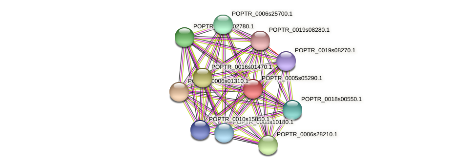 POPTR_0005s05290.1 protein (Populus trichocarpa) - STRING interaction network