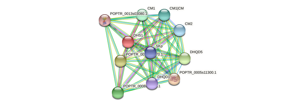 POPTR_0005s07450.1 protein (Populus trichocarpa) - STRING interaction network