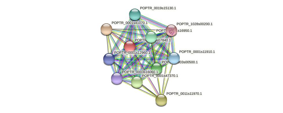 POPTR_0005s07840.1 protein (Populus trichocarpa) - STRING interaction network