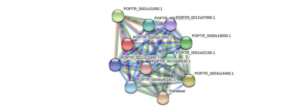 POPTR_0005s07890.1 protein (Populus trichocarpa) - STRING interaction network