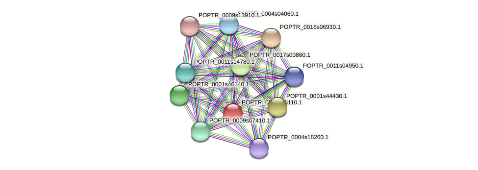 POPTR_0005s08110.1 protein (Populus trichocarpa) - STRING interaction network